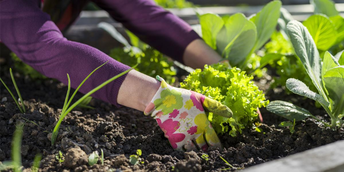 Close up of women digging in her garden